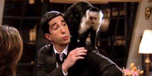 david schwimmer przyjaciele małpka